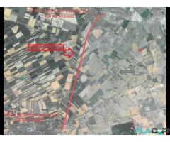 TEREN PECICA - TURNU (Zona Industriala Pecica - ARAD)
