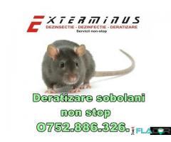 Deratizare-Dezinsectie non stop