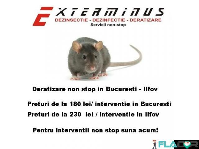 Deratizare-Dezinsectie non stop - 2/3