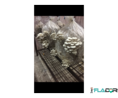 Compost pleurotus (vind) 20 lei - Imagine 4/5