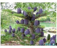 Materiale gradinarit Oradea-Master Garden