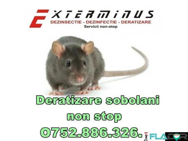 Dezinfectie-Dezinsectie-Deratizare non stop - 2/3