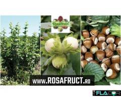 Alun pentru plantații - inflorescențe foarte rezistente la ger - www.rosafruct.ro
